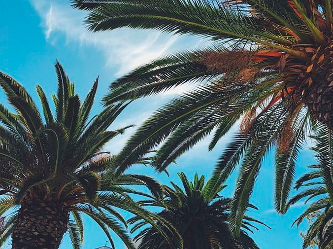 Consejos para la poda de palmeras
