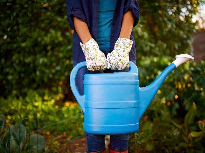 ¿Cómo regar las plantas en invierno?