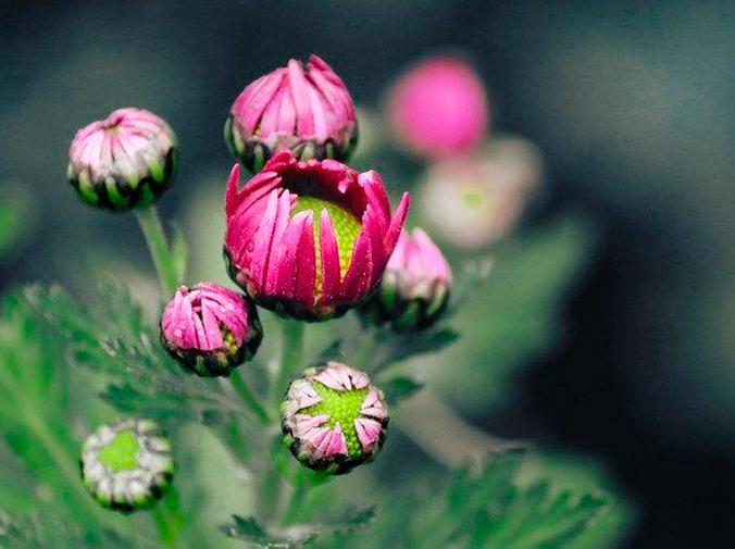 Flores ideales para sembrar en invierno